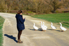 The girl looks at the geese Royalty Free Stock Photo