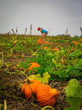 Girl looks to choose a pumpkin in the distance of pumpkin patch Royalty Free Stock Photos