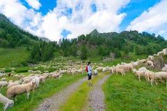 Girl looks transhumance of sheep Royalty Free Stock Images