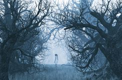 Girl lost in creepy forest royalty free stock photos