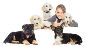 Girl and a lot of puppies Royalty Free Stock Photo