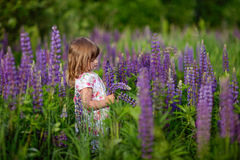 Girl with lupinus Stock Image