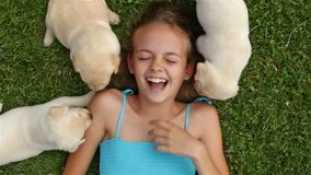 Girl lying on the grass and playing with labrador puppies stock video footage