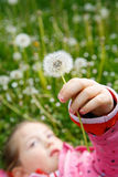 Girl lying in grass, surrounded by dandelion Royalty Free Stock Images