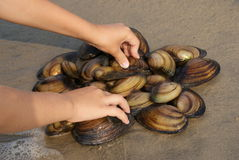 The girl made a star of molluscs. The girl made a star of  of clam shell on the sand at water edge Stock Photography