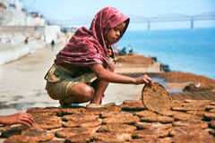 Girl making cow dung cakes Stock Photos