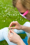 Girl making a daisy chain Royalty Free Stock Image