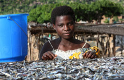 Girl in Malawi, Africa. A young girl selling fish in Malawi, Africa royalty free stock photo