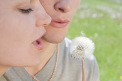 Girl and man are blowing on white dandelion Royalty Free Stock Image