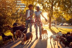 Girl and man dog walker with dogs enjoying in walk stock image