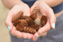 Girl with manicure in the forest holds a handful of pine cones Stock Photo