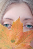 The girl with maple autumn sheet. The person of the nice girl covered with an autumn maple leaf removed close up Stock Photography