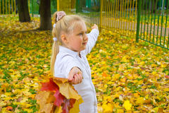 Girl with maple leaves. Girl with a bunch of yellow, autumn leaves Royalty Free Stock Photo