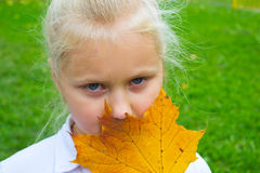 Girl with maple leaves. Girl with a bunch of yellow, autumn leaves stock photography
