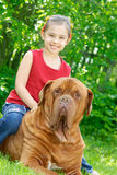 The girl and mastiff. The smiling girl astride the big dog of breed FRENCH MASTIFF, DOGUE DE BORDEAUX Royalty Free Stock Images