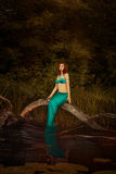 Girl mermaid in a swamp. Royalty Free Stock Photo