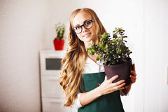 Girl with a money Tree is at home Royalty Free Stock Image