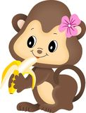 Girl monkey eating banana Stock Photography