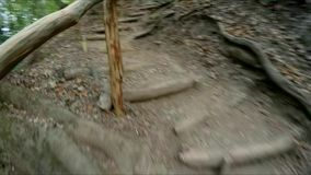 The girl is moving in the autumn forest with a gopro camera on her head. The girl is moving along the tourist route on the territory of the reserve. It passes stock video footage