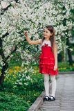 Girl near apple tree flowers in the park Royalty Free Stock Photo
