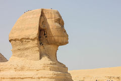 Sphinx face Royalty Free Stock Images