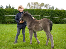 Girl with newborn foal Royalty Free Stock Images
