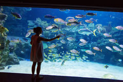 Girl observing fish at aquarium Stock Images