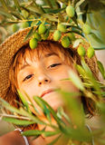 Girl in olive farm Stock Photography
