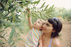 Girl and Olive Tree Royalty Free Stock Image