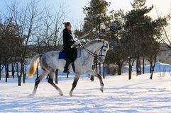 Free Girl On Dressage Horse In Winter Royalty Free Stock Image - 13070346
