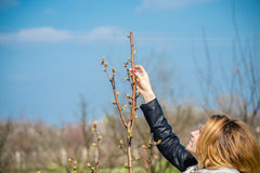 Girl in the orchard. The girl in the orchard controls flowers fruits Stock Photography