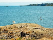 Paddle boarder. Girl on a paddle board near Cattle Point in Victoria BC, Vancouver Island, Canada stock photography