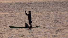 Girl on paddle board at Sunset time. Girl with dog enjoying paddle boarding on the Exe estuary in Exmouth Devon UK #Exmouth Stock Photos