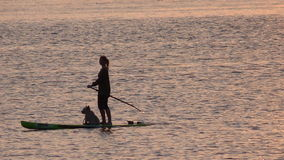 Girl on paddle board at Sunset time. Girl with dog enjoying paddle boarding on the Exe estuary in Exmouth Devon UK #Exmouth Stock Photography
