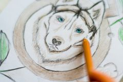 Macro of painting with pencils Husky on a white sheet in a cafe On a white wooden table light background stock photo