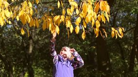The girl in the park touches a twig of yellow leaves.  stock footage