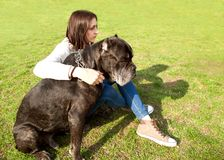 Girl in the park walking with their big dog Cane Corso.  Stock Photo