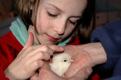 Girl patting a chick royalty free stock photos