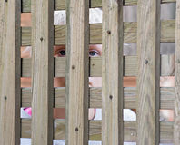 Girl Peering Through Fence Royalty Free Stock Photography