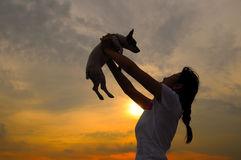 Girl and pet dog at sunset. Asian girl holding up jack russell at sunset Stock Photography