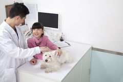 Girl with pet dog in veterinarian's office Royalty Free Stock Images