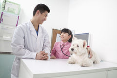 Girl with pet dog in veterinarian's office Stock Photos