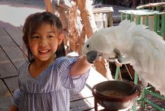 A girl petting a cockatoo. An Asian girl petting a cockatoo parrot on the head at a zoo stock photo