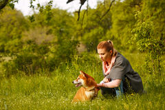 Girl petting a dog Shiba Inu. Stock Photos