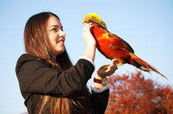 The girl with a pheasant on hand. The happy teen with a pheasant on hand Stock Photos