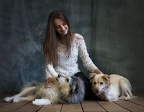 A girl is photographed with dogs from the shelter. Dogs are cautious and afraid, but they are treated well.  stock photography