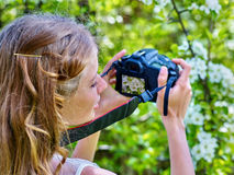 Girl photographs blossoming tree Stock Images