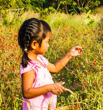 Girl pick up chilli. Stock Photography