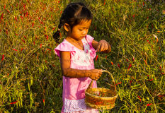 Girl pick up chilli. Royalty Free Stock Image