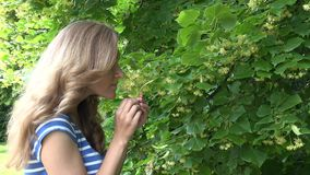 Girl pick yellow linden hand at summer. Seasonal herb picking . 4K. Herbalist girl pick yellow linden flower in hand at summer day. Seasonal herb picking in park stock video